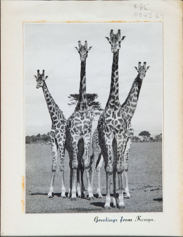 Greeting from Kenya. H. Selby, A. Holmberg.