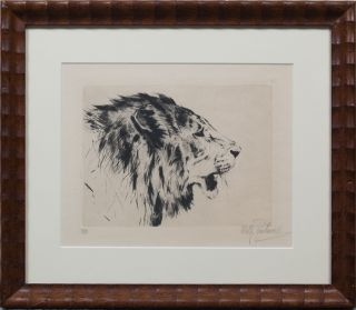 Lion Head. Wilhelm Kuhnert