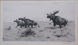Fleeing Moose